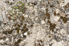 Texture of the old concrete wall with a damaged surface and small cracks Stock Image