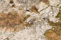 Texture of the old concrete wall with a damaged surface and small cracks. On some parts of the wall moss grows Royalty Free Stock Image