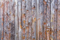 Texture of old coniferous tree with bark. Orange and gray color royalty free stock photo