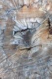 Texture of old cork oak Royalty Free Stock Photos