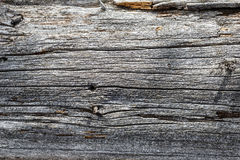 Texture of the old dry gray wood background Royalty Free Stock Image