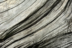 Texture of old dry wood Stock Image