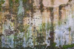Texture of old forest wall. With moisture, verdigris, moss y chipping stock images