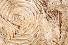Texture of old fossilized sea shells on the rock Stock Photography