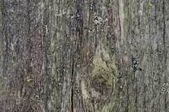 Texture of old gray wood, close-up Royalty Free Stock Photo