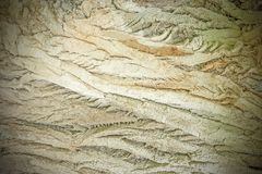 Texture of the old ill tree. Royalty Free Stock Photo