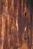 Texture of old impregnated pine tree wood Royalty Free Stock Photography