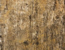 Texture of old light brown wood Stock Images
