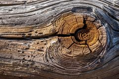 Texture of the old logs Stock Photo
