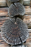 Texture of old logs. Stock Image