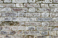 Texture old mossy gray brick wall Royalty Free Stock Photography