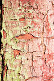 Texture of old paint Royalty Free Stock Images