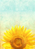 Texture of old paper with sunflower Stock Images