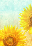 Texture of old paper with sunflowers Stock Photography