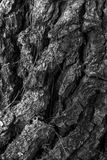 Texture of an old pine bark Stock Photo