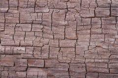 Texture of old pine bark tree Royalty Free Stock Photos