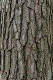 Old pine bark texture Royalty Free Stock Photography
