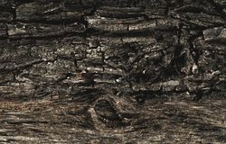 The texture of the old rotten tree with bark cracks and irregularities. Volume wallpapers royalty free stock photography