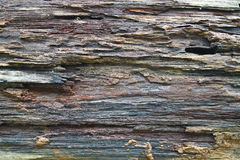 Texture of old rough wood on the board Royalty Free Stock Photo