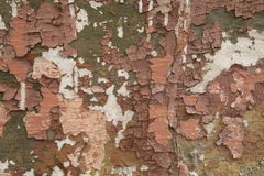 Texture of old shabby painted wall. Texture of old aged shabby peeling green brown white painted wall background Royalty Free Stock Photos
