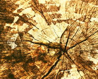 Old wooden stump Stock Photography
