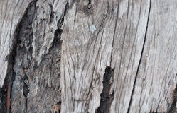 Texture of old teak wood Stock Photos