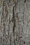 Old wood texture with a crack. Texture of an old tree with a big crack in the center Stock Photography