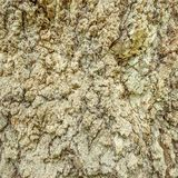 Texture of the old tree. Royalty Free Stock Image