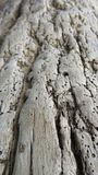 Texture of old tree rind Stock Photography