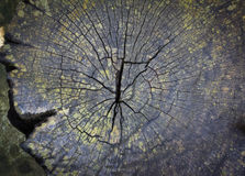 Texture of old tree stump. Taxture of old wood cracked, tree stump Stock Photos