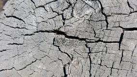 Texture of old tree stump with cracks Stock Images