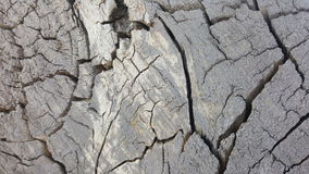 Texture of old tree stump with cracks Royalty Free Stock Photos