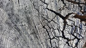 Texture of old tree stump with cracks Stock Image
