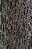 Texture of old tree trunk Royalty Free Stock Photo