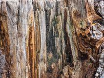 Texture old tree wood, annual growth ring. Texture old tree wood, abstract background, cracked wooden, cross section, annual growth ring Stock Image