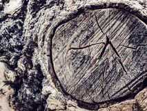 Texture old tree wood, annual growth ring. Texture old tree wood, abstract background, cracked wooden, cross section, annual growth ring Royalty Free Stock Photos