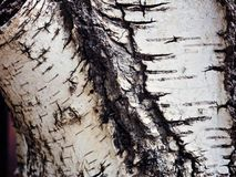 Texture old tree wood, annual growth ring Stock Photography