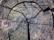 Texture old tree wood, annual growth ring. Texture old tree wood, abstract background, cracked wooden, cross section, annual growth ring Royalty Free Stock Images