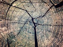 Texture old tree wood, annual growth ring. Texture old tree wood, abstract background, cracked wooden, cross section, annual growth ring Royalty Free Stock Photo