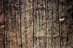 Texture of the old weathered wood. Stock Photos