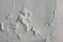 Texture of the old white paint in the morning light Stock Images