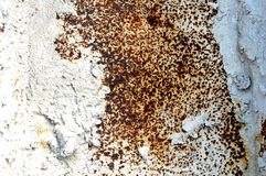 Texture of an old white rusted metal iron sheet. Detailed rust background. Or texture Royalty Free Stock Image