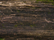 The texture of old wood Royalty Free Stock Photography