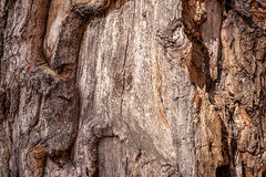 Texture of old wood Royalty Free Stock Image