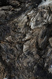 Texture of the old wood. Stock Photo