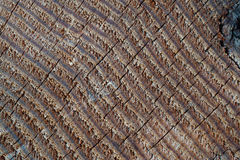 Texture of old wood. Annual ring texture of old wood Royalty Free Stock Photography