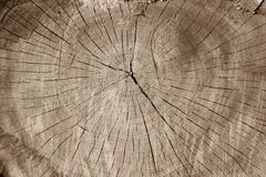 Texture of old wood with annual rings. Natural background Royalty Free Stock Image