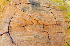 Texture of old wood with annual rings. Natural texture close-up Stock Photography