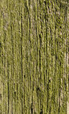 Texture, old wood covered with green moss Stock Photography