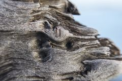 Texture of old wood, crumbled fibers with a piece of sky on the background. Macrophoto royalty free stock images